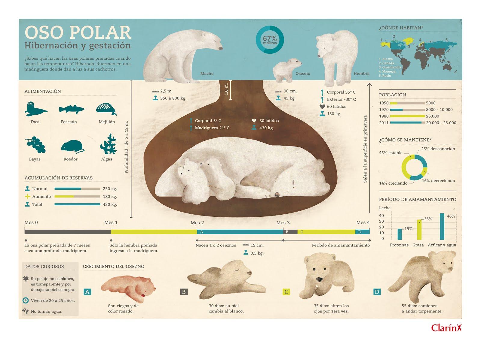 infografiaD-01
